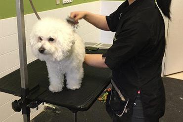 Fluffy Paws Grooming School Dog Grooming School In Ontario Canada